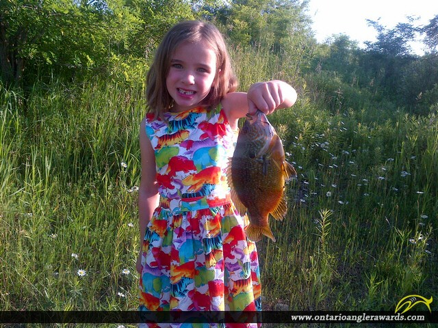 """10.25"""" Pumpkinseed caught on Gravel Pit"""