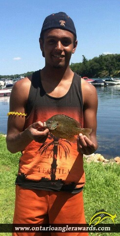 """9.00"""" Pumpkinseed caught on St. Lawrence River"""