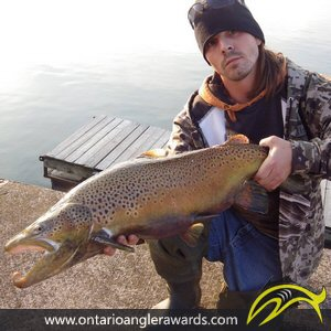 "39"" Brown Trout caught on Lake Ontario"