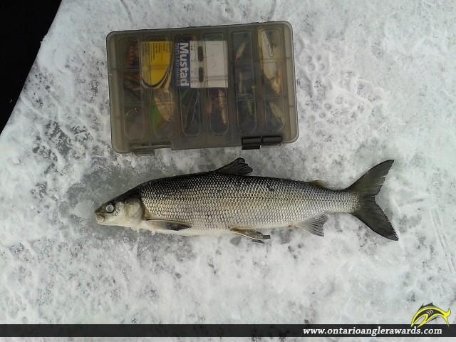 """22.00"""" Whitefish caught on Lake Bernard"""