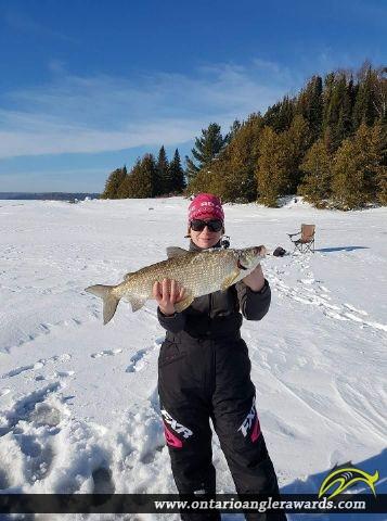 """26.5"""" Whitefish caught on Big Sandy Lake"""