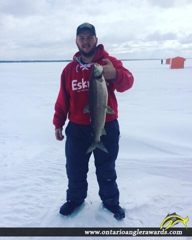 """28"""" Whitefish caught on Lake Simcoe"""