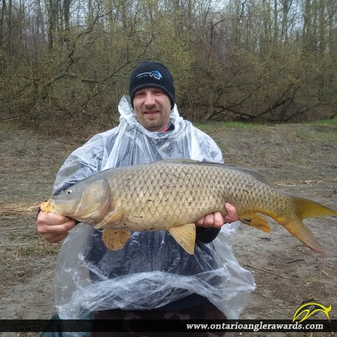 "31"" Carp caught on South Nation River"