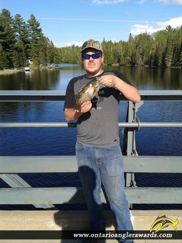 """11"""" Rock Bass caught on South River"""