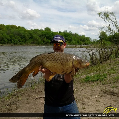 "34.5"" Carp caught on South Nation River"