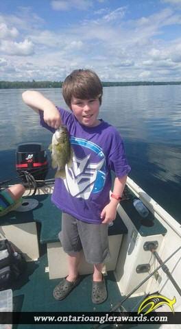 "10"" Rock Bass caught on Mink Lake"