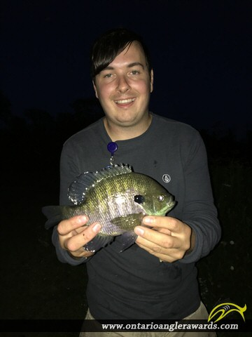 "10.5"" Bluegill caught on St. Lawrence River"