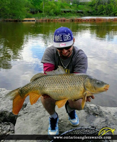 "36"" Carp caught on Grindstone Creek"