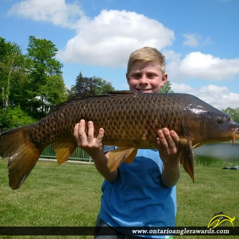 "32.5"" Carp caught on Maitland River"