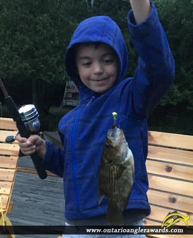 """11"""" Rock Bass caught on Neighik Lake"""