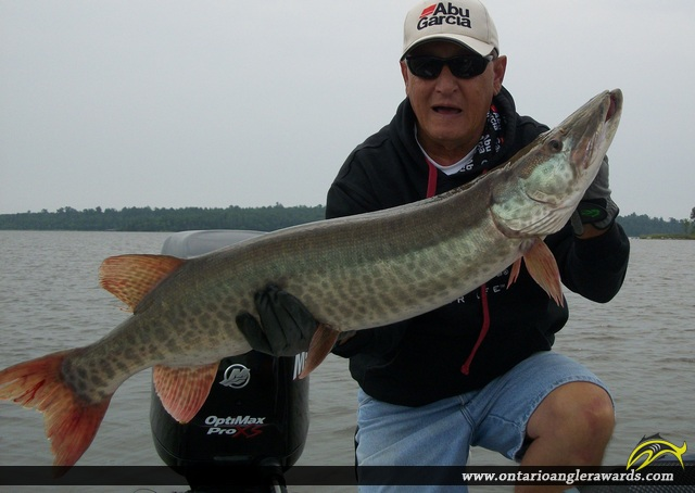 "48.75"" Muskie caught on Lake of the Woods"