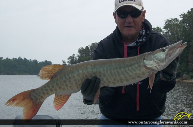 "36"" Muskie caught on Lake of the Woods"