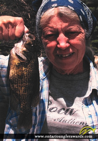"11.5"" Rock Bass caught on Galeairy Lake"