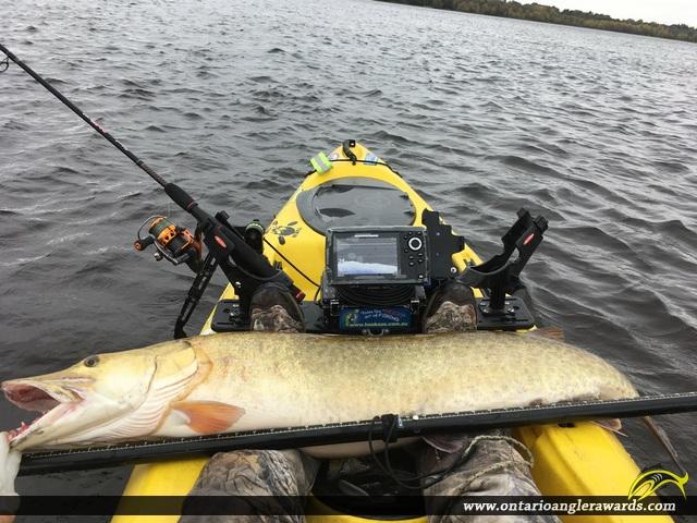 "50"" Muskie caught on Ottawa River"