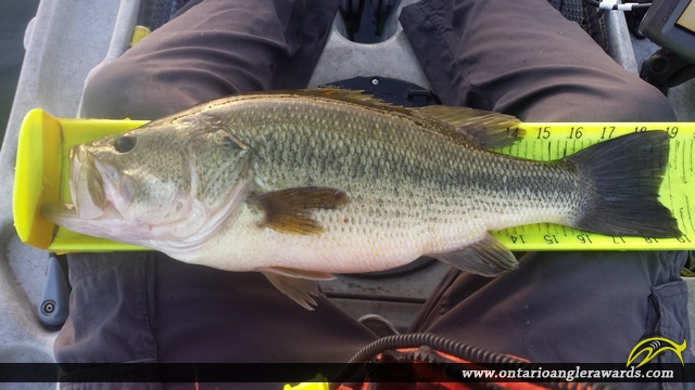 "19"" Largemouth Bass caught on Bay of Quinte"