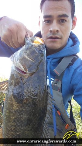 """17"""" Smallmouth Bass caught on Nith river"""