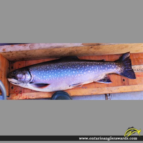 "20"" Brook/Speckled Trout caught on Nipigon River"