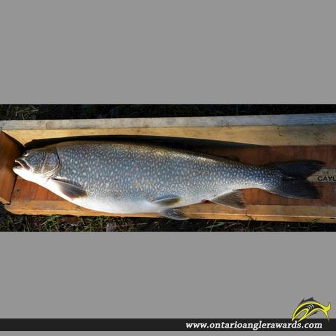"28.5"" Lake Trout caught on Lake Superior"