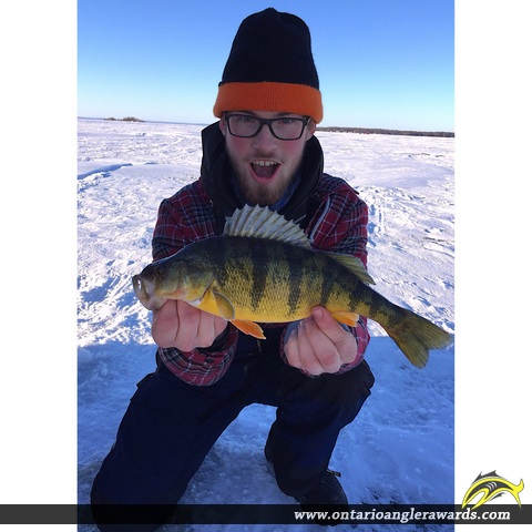"14"" Yellow Perch caught on Lake Simcoe"