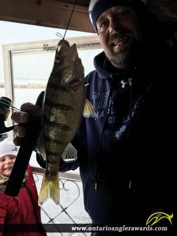 "13.5"" Yellow Perch caught on Lake Nipissing"