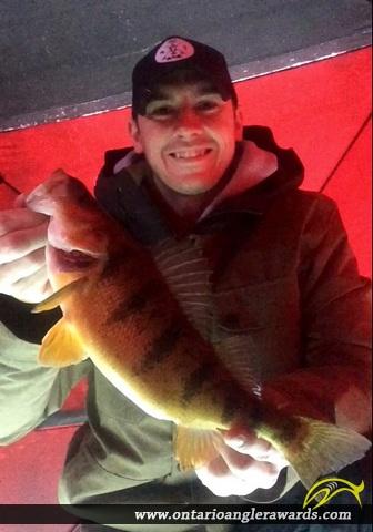 "14.75"" Yellow Perch caught on Lake Simcoe"