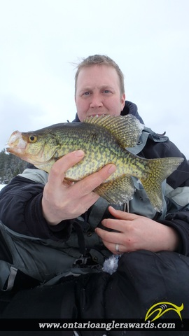 "12.00"" Bluegill caught on Magnetawan River"