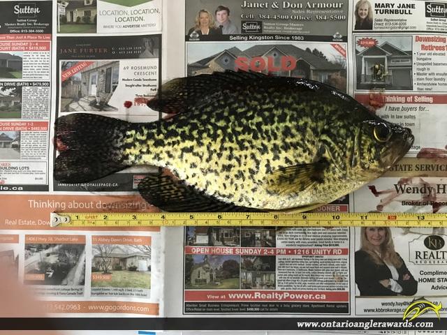 "12.5"" Black Crappie caught on Sydenham Lake"