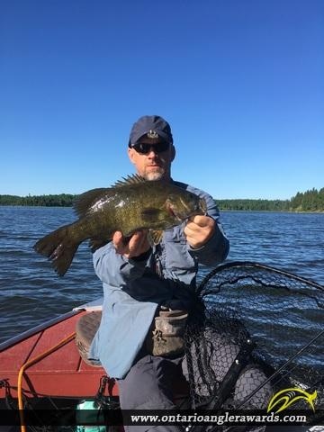 """17.75"""" Smallmouth Bass caught on Cedar River"""