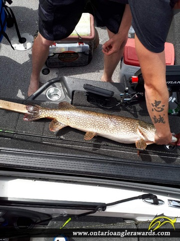 "38"" Northern Pike caught on Winnipeg River"