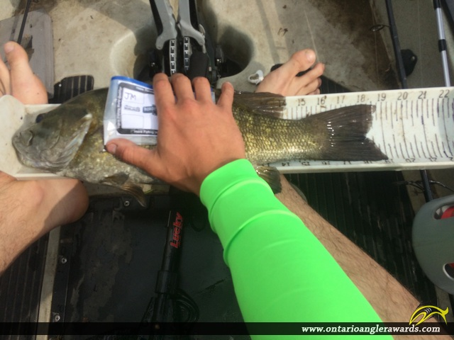 """19"""" Smallmouth Bass caught on Lake St. Clair"""