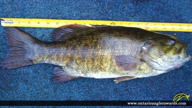 "21"" Smallmouth Bass caught on Baptiste Lake"