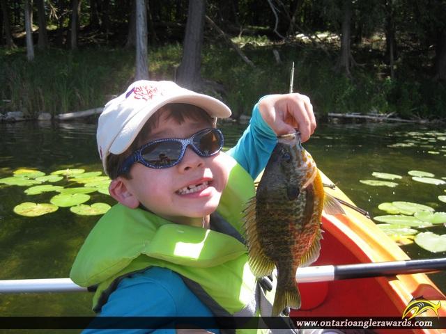 """9"""" Pumpkinseed caught on Loon Lake"""