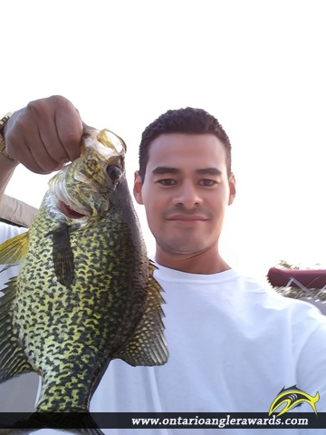 "14"" Black Crappie caught on Sturgeon Lake"