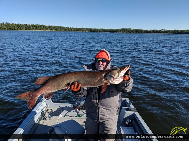 """47"""" Muskie caught on Long Legged lake"""