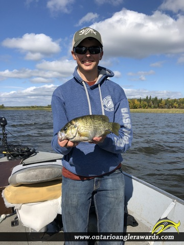 "11.5"" Rock Bass caught on Lake of the Woods"