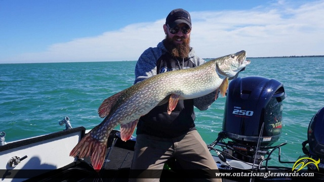 """41"""" Northern Pike caught on Lake Erie"""