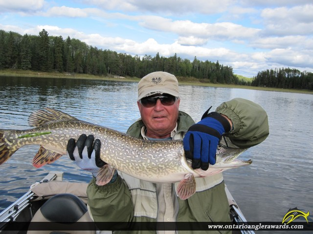 "31"" Northern Pike caught on Winnipeg River"