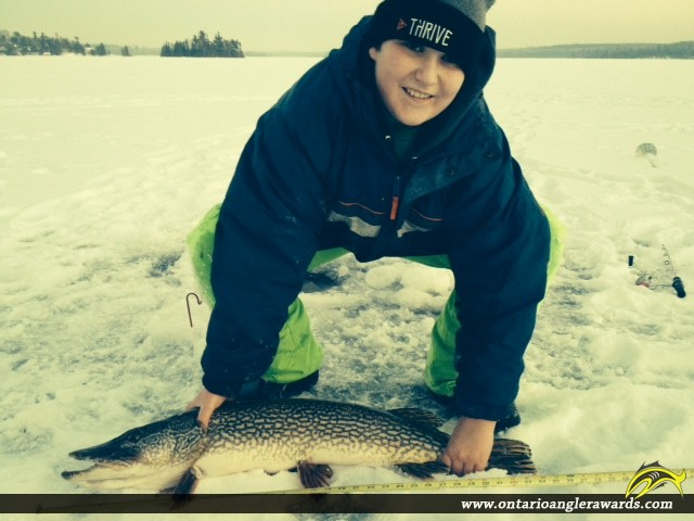 """32"""" Northern Pike caught on Longbow Lake"""