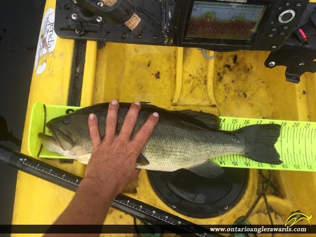 """19"""" Largemouth Bass caught on Clayton Lake"""