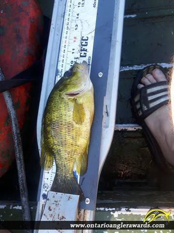 """10"""" Rock Bass caught on Upper Beverly"""