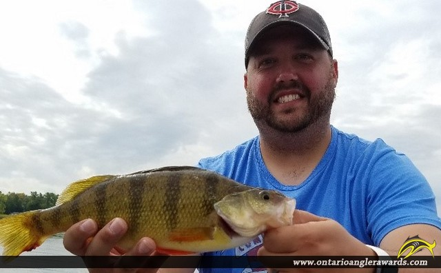 "12.5"" Yellow Perch caught on Lake of the Woods"