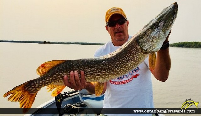 """40.5"""" Northern Pike caught on Lake of the Woods"""