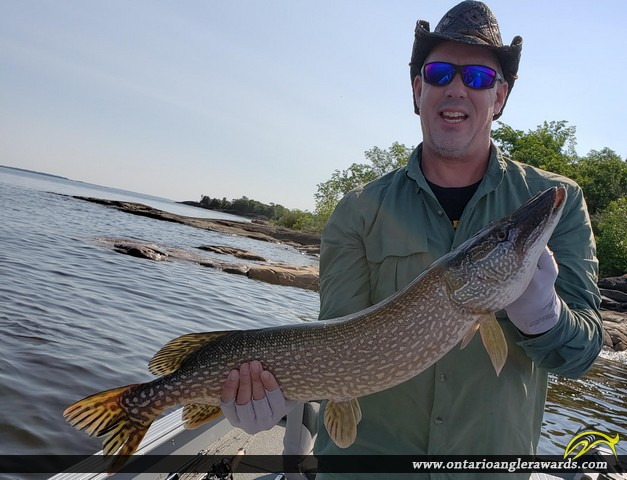 """36"""" Northern Pike caught on Lake of the Woods"""