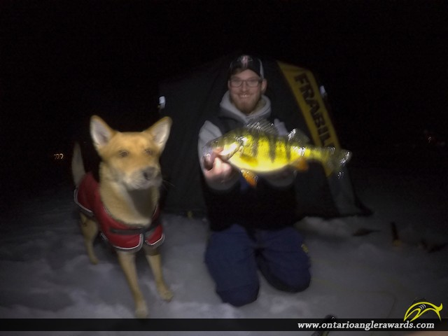 "13.75"" Yellow Perch caught on South Lake"