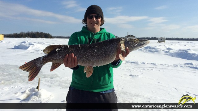 "43"" Northern Pike caught on Lac des Mille Lacs"