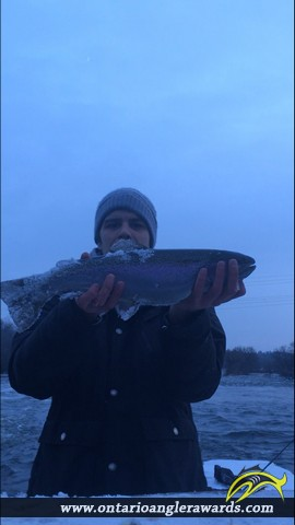 "21"" Rainbow Trout caught on Trent River"