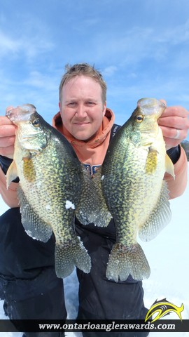 "14.01"" Black Crappie caught on Commanda Lake"