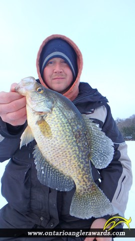 "14.00"" Black Crappie caught on Commanda Lake"