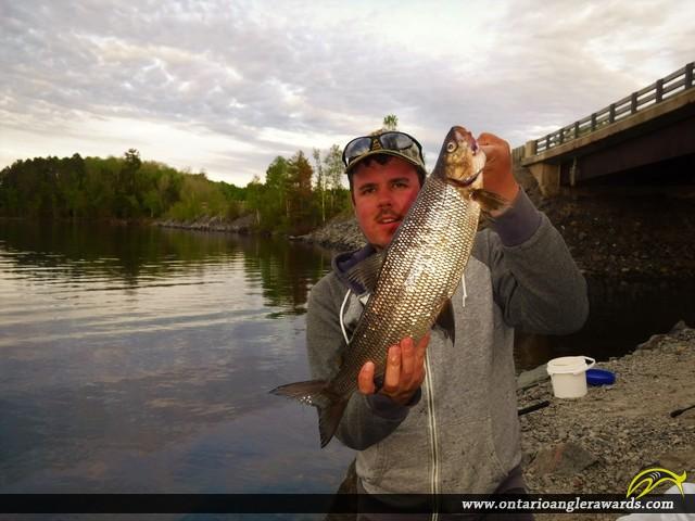 "22"" Whitefish caught on Rainy Lake"
