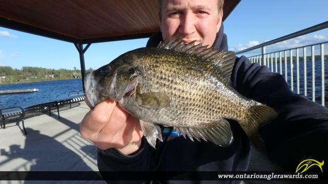 "10.02"" Rock Bass caught on Lake Nipissing"